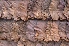 Wand hergestellt von den trockenen Blättern in der Landschaft Stockfotografie