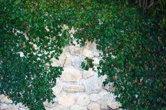 Wand im Laub Stockfotos