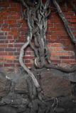 Wand mit einem Baum Lizenzfreie Stockbilder