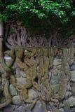 Wand mit einem Baum Stockfotografie