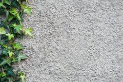Wand mit einem Efeu Hintergrund Stockbild