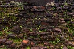 Wand mit gras Stockfoto
