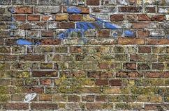 Wand mit Moos, Kreidemörser und Farbe Stockfoto