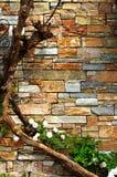 Wand mit Reben Lizenzfreie Stockfotos