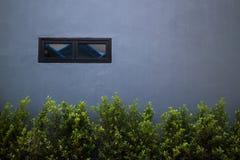 Wand und Baum Stockfoto