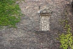 Wand- und Fensterrahmen umfasst mit Grün und Brown-Reben Stockfotos