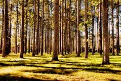 Wand von Bäumen lizenzfreie stockfotografie