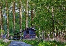 Wand von Bäumen Lizenzfreies Stockfoto