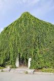 Wand von Blättern Stockbild
