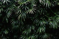 Wand von Palmen lizenzfreie stockfotografie