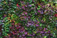 Wand von verblassenden Blumen Stockfotos