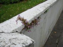 Wandblumen Stockbild