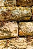 Wandeidechse an einer alten Abteiwand Stockfotografie