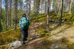 Wandelaar in bos royalty-vrije stock afbeeldingen