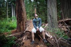 Wandelaar in Californische sequoia's stock foto