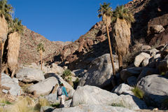 Wandelaar in de Bergen van de Woestijn Stock Afbeeldingen