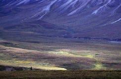 Wandelaar in Nationaal Park Denali royalty-vrije stock foto's