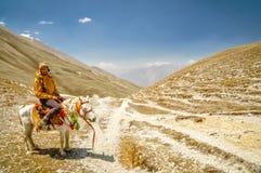 Wandelaar op paard Stock Afbeeldingen
