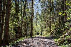 Wandelaars die door groene bosweg lopen Stock Foto's