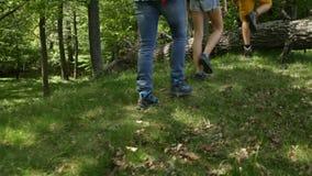 Wandelaars die over gevallen boomlogin het bos springen stock videobeelden