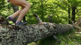 Wandelaarslaarzen die over gevallen boom springen stock videobeelden