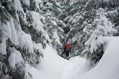 Wandelaartrekking in de winter Royalty-vrije Stock Afbeeldingen