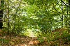 Wandelend in een wild bos, zonlicht door de bomen royalty-vrije stock fotografie