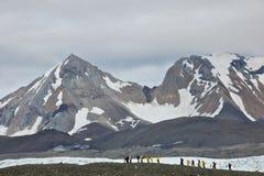 Wandelend in Hornsund, Svalbard stock foto