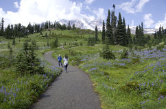 Wandelend in Mt Rainier National Park stock foto's