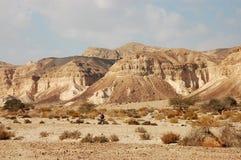 Wandelend in Negev woestijn, Israël. royalty-vrije stock foto's