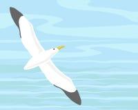 Wandelende albatros Royalty-vrije Stock Afbeelding