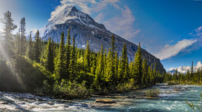 Wandelende Berg Lake Trail Stock Foto