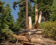 Wandeling aan Marlette-Meer in Meer Tahoe royalty-vrije stock afbeeldingen