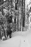 Wandeling in de sneeuw Stock Afbeeldingen