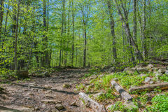 Wandeling door Forest Of Glowing Green Leaves royalty-vrije stock fotografie