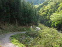 Wandeling in het bos royalty-vrije stock fotografie