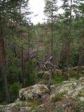 Wandeling in het bos in het midden van Finland royalty-vrije stock foto's