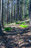 Wandeling in het bos op een warme zonnige dag in de Pyreneeën Royalty-vrije Stock Foto's