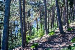 Wandeling in het bos op een warme zonnige dag in de Pyreneeën Royalty-vrije Stock Afbeeldingen