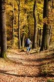 Wandeling in het hout Royalty-vrije Stock Fotografie