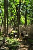 Wandeling in het hout Royalty-vrije Stock Foto's