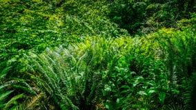 Wandeling het Lopen en achterin het Onderzoeken van het Mooie Groene en Natuurlijke Tolmie-Park van de Staat in Nisqually Washing stock fotografie