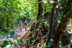 Wandeling op de bosachtergrond Stock Foto's
