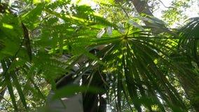 Wandelingslaarzen die in openlucht avontuur in regenwoudhout lopen stock videobeelden
