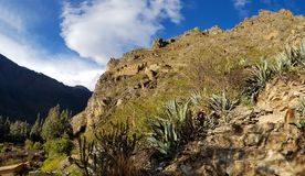 Wandelingssleep aan Ruïnes van Pinkulluna, Ollantaytambo, Peru stock fotografie