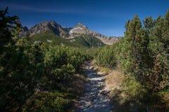 Wandelingssleep in bergen met rotsachtige pieken op de achtergrond Royalty-vrije Stock Afbeelding