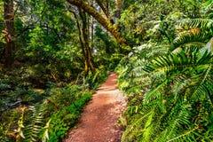 Wandelingssleep door de weelderige bossen van het Park van de Staat van MT Tamalpais, Marin County, baaigebied de Noord- van San  stock afbeelding
