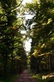 Wandelingssleep in een vergankelijk bos stock afbeelding