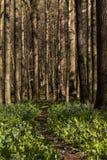 Wandelingssleep en Virginia Bluebell Wildflowers - Ohio stock fotografie