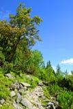 Wandelingssleep in Hoge Tatra-Bergen Stock Foto